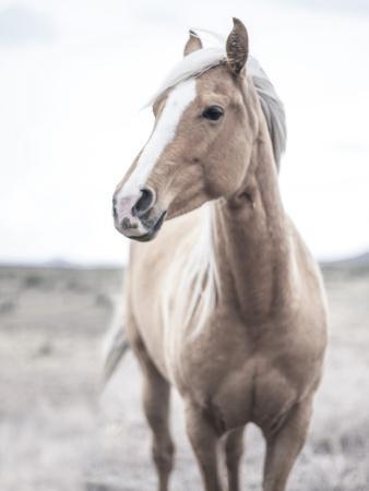 Western Blonde