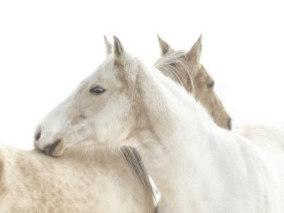 White Horse mendon