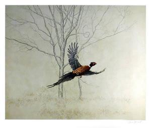 Pheasant by Chris Forrest