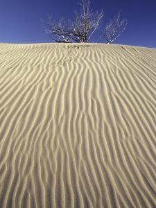 Farwell Canyon Sand Dune, British Columbia, Canada. by Chris Harris