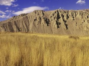 Grasslands at Farwell Canyon, British Columbia, Canada. by Chris Harris