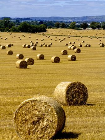 Bales of Hay in County Carlow, Ireland by Chris Hill