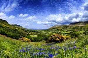 Bluebells in the Glens of Antrim, Northern Ireland by Chris Hill