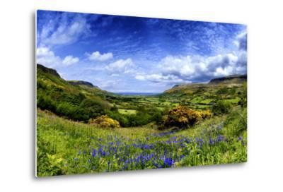 Bluebells in the Glens of Antrim, Northern Ireland