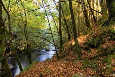 Fall Colors in Clare Glens Forest in Limerick, Ireland by Chris Hill