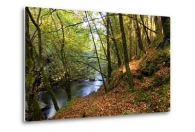 Fall Colors in Clare Glens Forest in Limerick, Ireland