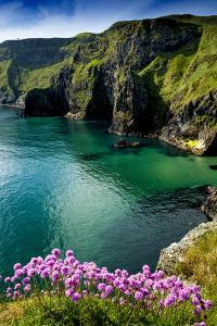 Sea Pinks at Carrick-A-Rede on the North Coast of Northern Ireland by Chris Hill