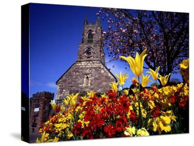 Spring Flowers at the Priory, Holywood, County Down