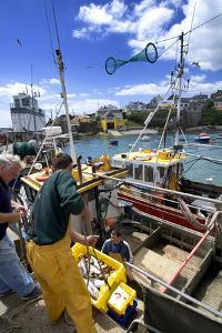 Unloaded the Catch from Fishing Boats at Ballycotton in County Cork, Ireland by Chris Hill