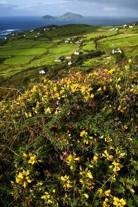 Wildflowers and Green Fields Along Darrynane Bay, Ring of Kerry, Ireland by Chris Hill