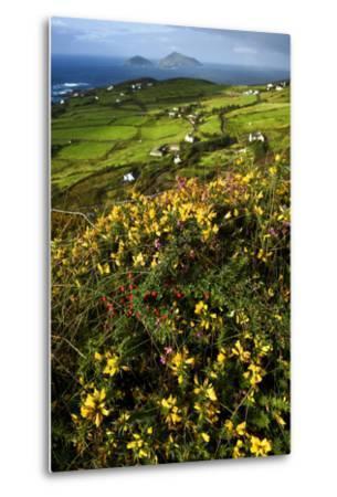 Wildflowers and Green Fields Along Darrynane Bay, Ring of Kerry, Ireland