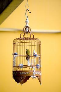 Bird in an Ornate Cage, Singapore. by Chris Howey