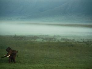 An African Elephant in the Ngorongoro Crater by Chris Johns
