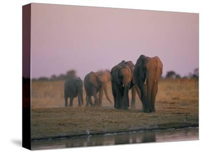 Elephants Roam the Plains of Moremi Game Reserve