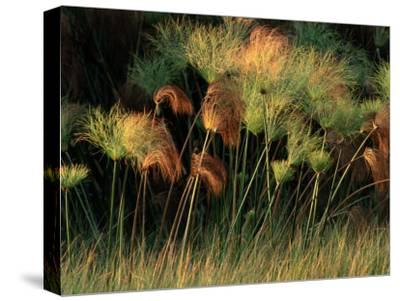 Grasses and Tassles