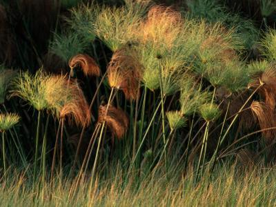 Grasses and Tassles by Chris Johns