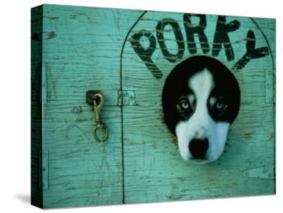 Porky the Dog