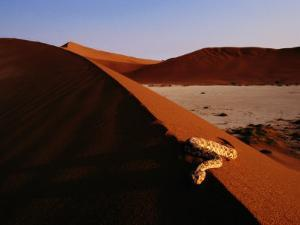 Snake on a Sand Dune by Chris Johns
