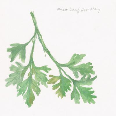 Flat Leaf Parsley by Chris Paschke