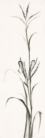 Gray Grasses IV by Chris Paschke