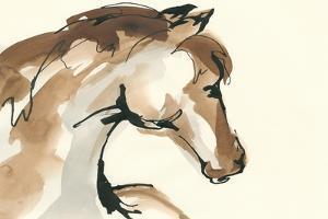 Horse Head I by Chris Paschke