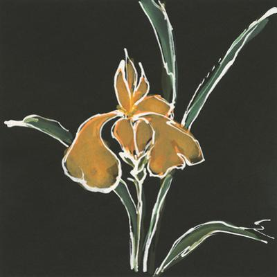 Iris on Black VI by Chris Paschke