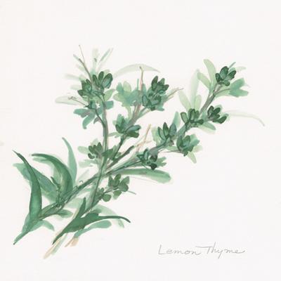 Lemon Thyme by Chris Paschke