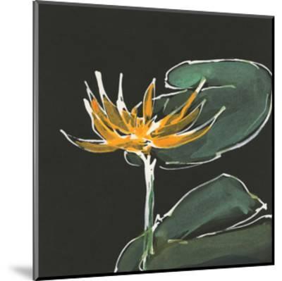 Lily on Black I by Chris Paschke