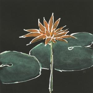 Lily on Black VI by Chris Paschke
