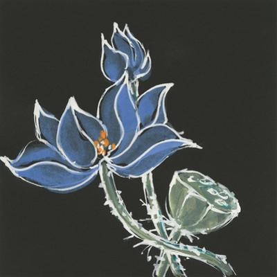 Lotus on Black VI by Chris Paschke
