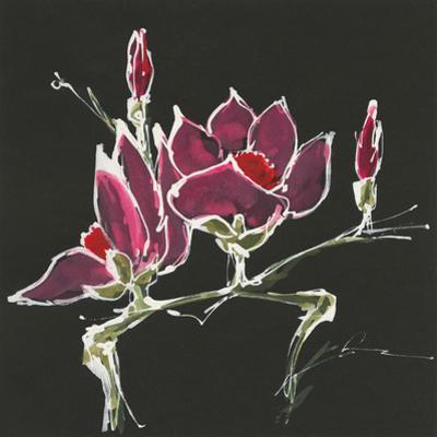 Magnolia on Black III by Chris Paschke
