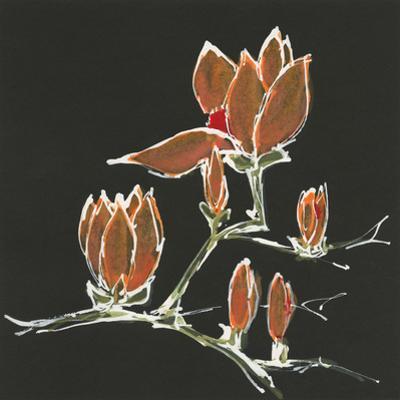 Magnolia on Black IV by Chris Paschke