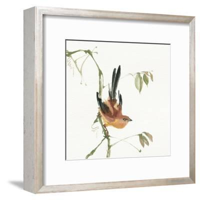 Mountain Bush Warbler by Chris Paschke