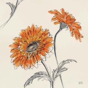 Orange Gerbera II by Chris Paschke