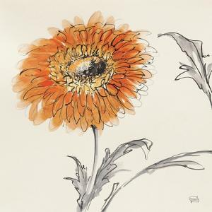Orange Gerbera III by Chris Paschke