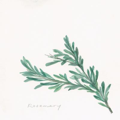 Rosemary by Chris Paschke