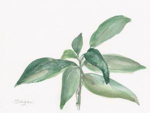 Sage I by Chris Paschke