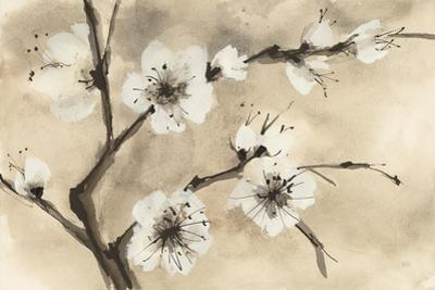 Spring Blossoms IV by Chris Paschke