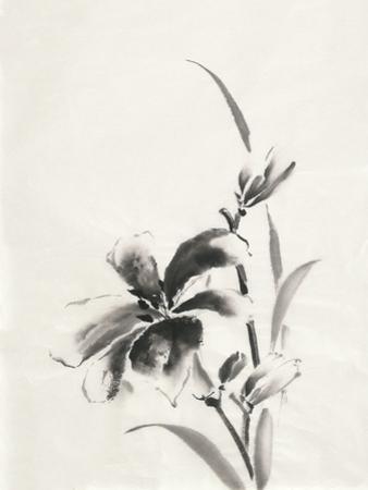 Sumi Daylily IV by Chris Paschke