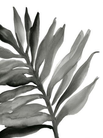 Tropical Palm III BW by Chris Paschke