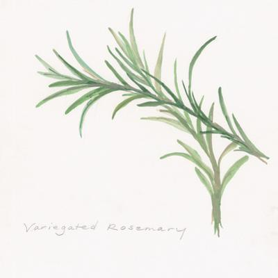 Variegated Rosemary by Chris Paschke