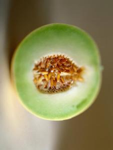 One Half of a Honeydew Melon by Chris Rogers