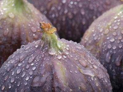 Fresh Figs with Drops of Water