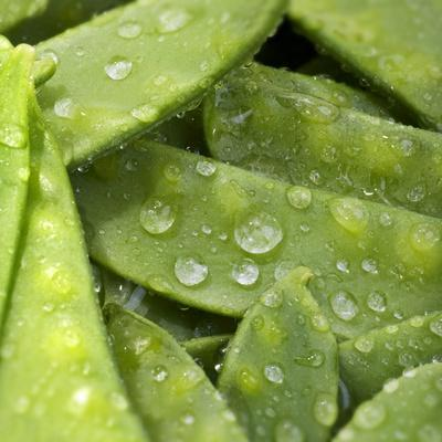 Mangetout with Drops of Water