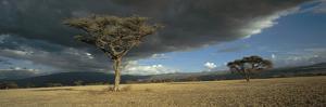 Olduvai Gorge by Chris Simpson