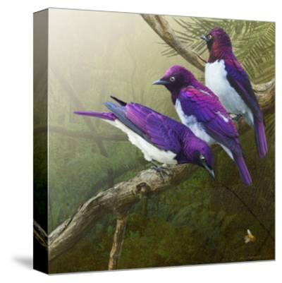 African Starlings
