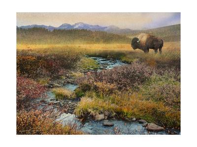 Bison & Creek