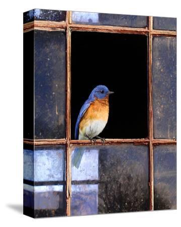 Bluebird Window