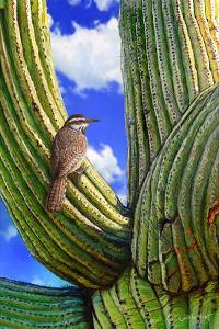 Cactus Wren by Chris Vest