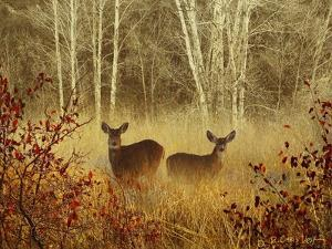 Foggy Deer by Chris Vest